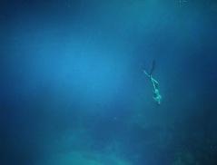 Free Diving-20 meters