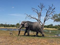 Elephants!!