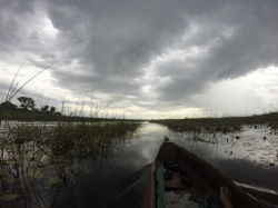 Mokoro Ride up the Thamalakane River in Botswana