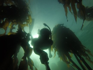 Kelp Beds in Simons Town, South Africa
